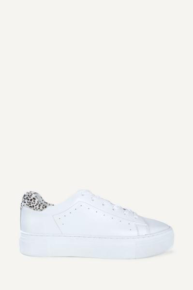 Dalmatier achter wit